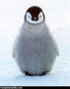 Fat_Fuzzy_Penguin